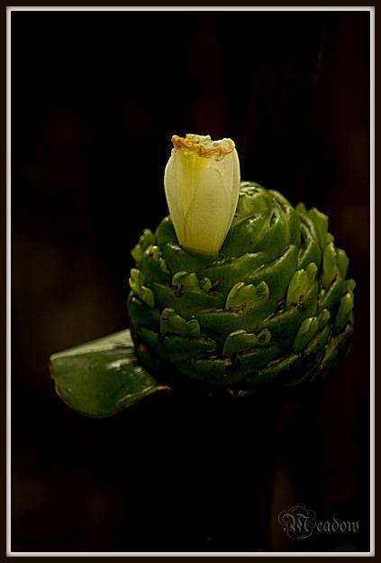 Vypada to jako kaktus