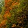 podzimni-duby