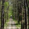 kralova-stolice-cesta