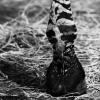 zebri kopytko
