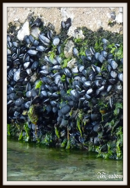 portoroz-more-na-zdi