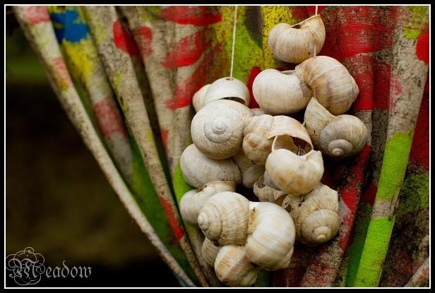 Moraniny-korale