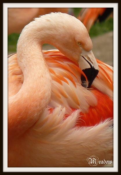 zoo-ptaci-cechrani-peri