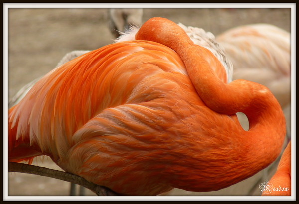 zoo-ptaci-nerusit