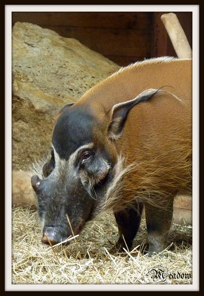 zoo-zvirata-stetkoun-africky