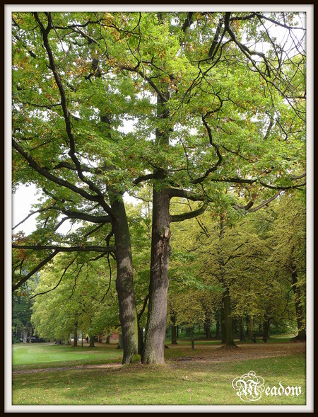 hradek-u-nechanic-stromy