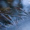 Jezirko zamrzle