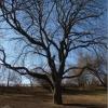 vysehrad-strom
