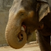 slonice-rani
