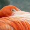 zoo-ptaci-oko