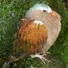 zoo-ptaci-s-morkym-perim