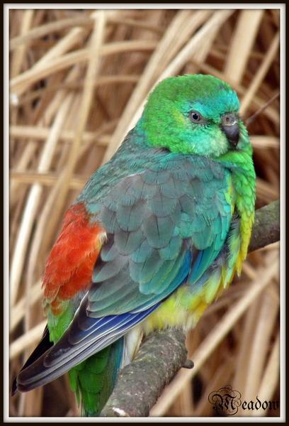 zoo-ptaci-barvy