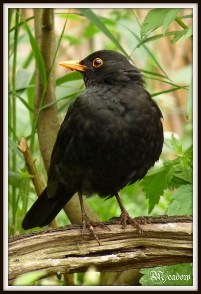zoo-ptaci-kos