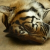 zoo-zvirata-kocina-opociva