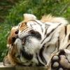 zoo-zvirata-spim