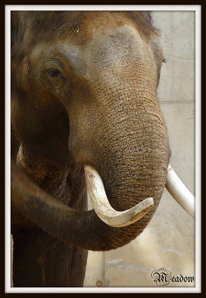 zoo-zvirata-mekong